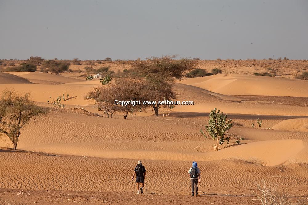 Erg Ouarane , desert of sand and dunes , in Adrar mountain   ///   .Erg Ouarane ,desert de sable et dunes, plateau de l Adrar  chin   .///.L0055701