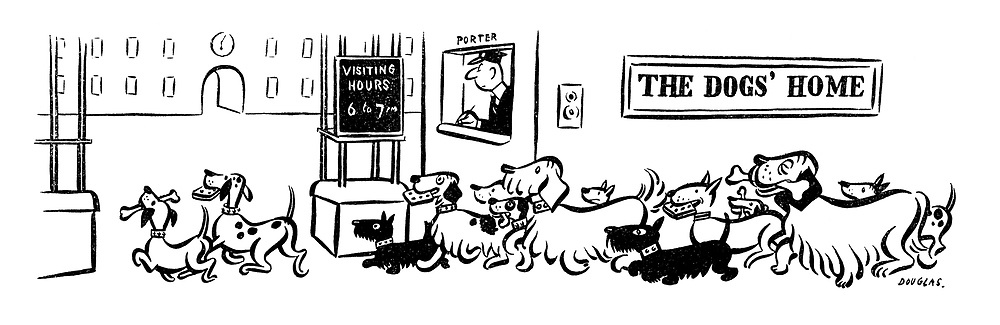(Dogs visit a dogs' home)