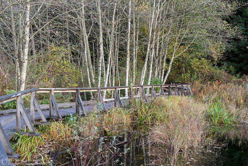 The Deer Lake Trail in Sasquatch Provincial Park, British Columbia, Canada.  The Deer Lake Trail boardwalk passes over a wetland marsh on the west side of the lake near the Bench Campgrounds.