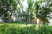 Illinois Woodlands