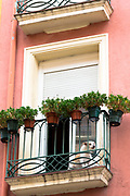 Terrier dog on balcony of traditional Spanish apartment home in Pamplona, Navarre, Northern Spain