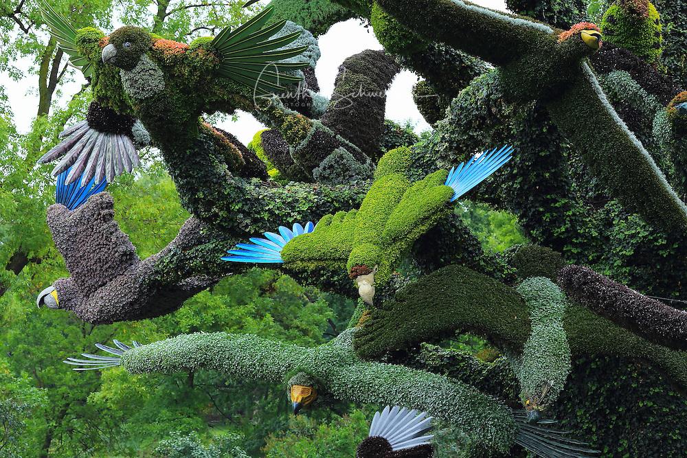 The Bird Tree