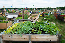 Urban public community  garden or Allmende Kontor at  historic  Tempelhof Airport now park in Berlin Germany