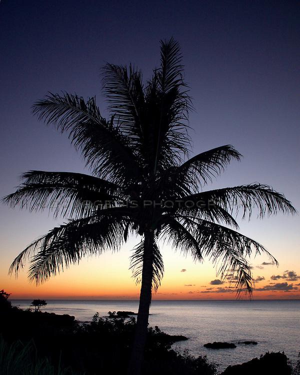 Hawaiian sunset with palm tree silhouetted