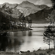 Blea Tarn Pines and the Langdale Pikes, Lake District, Cumbria Blea Tarn