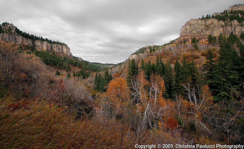 Spearfish Canyon in The Black Hills of South Dakota in October 2005. (Christina Paolucci, photographer)