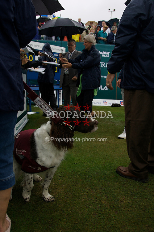 Liverpool, England - Wednesday, June 13, 2007: A hearing dog for the deaf waits to meet Bjorn Borg on a rainy and wet centre court at Calderstones during action on day two of the Liverpool International Tennis Tournament. Bjorn was scheduled to play his first match on grass since 1981 but was forced to withdraw after a dog bit his leg. For more information visit www.liverpooltennis.co.uk. (Pic by David Rawcliffe/Propaganda)2