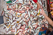 an assortment of small fish for sale, duong dong market
