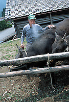 "photo©Tom Wagner<br />Ichiro Tochigi, 70 years old, in Mie prefecture, near Matsuzaka, Japan.<br />Mr Tochigi first sprays Sake onto ""Sachi"", one of his Matsuzaka beef cows, prior to massaging it"