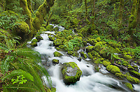 Ruckel Creek, Columbia River Gorge National Scenic Area, Oregon