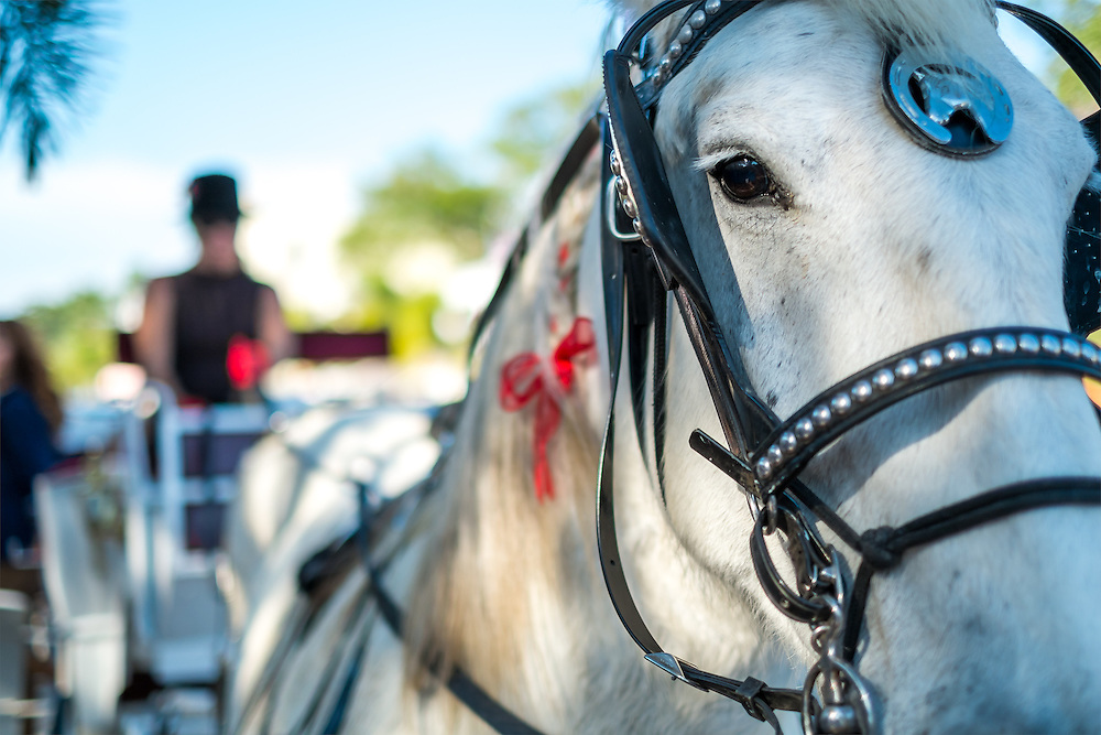 Close up of a horse and carriage, use of selective focus on horse eye.