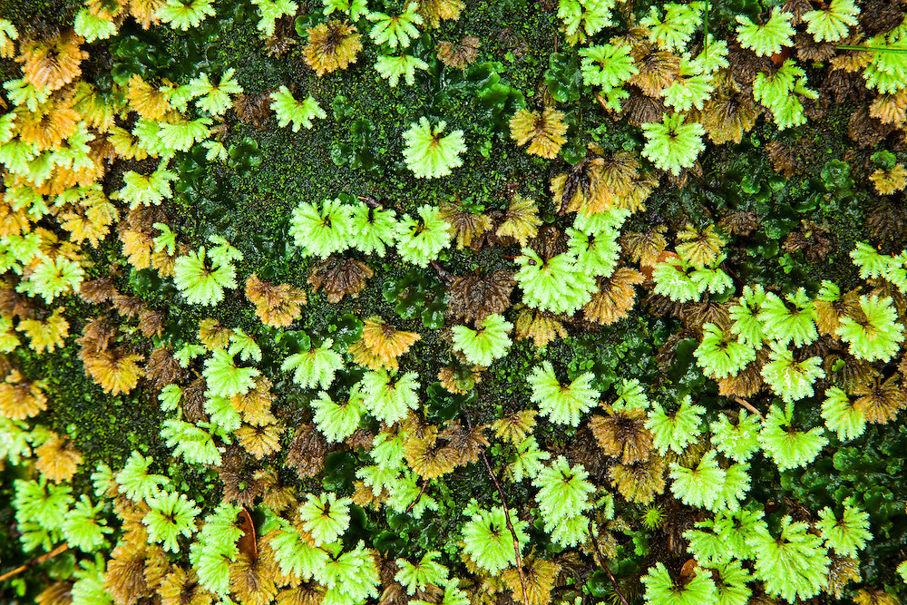 Small growing mosses in the Franklin-Gordon Wild Rivers National Park.