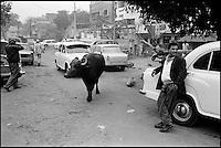 Inde. New Delhi. Quartier de Paharganj. // india. New Delhi. Paharganj quarter.