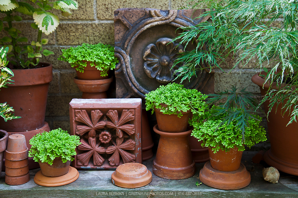 Plants in decorative terra cotta flower pots in a container garden.