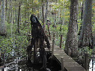 Rougarou sculpture by self-taught artist at Adam's Cypress Swamp Driftwood Family Museum in Pierre Part, Louisiana.