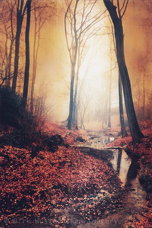 Sonnenaufgang in herbstlichem Wald mit Bach, Wuppertal, Deutschland