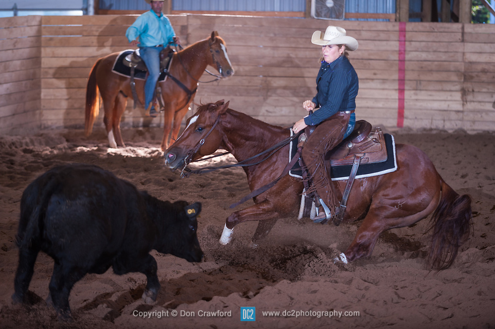 September 24, 2017 - Minshall Farm Cutting 6, held at Minshall Farms, Hillsburgh Ontario. The event was put on by the Ontario Cutting Horse Association. Riding in the Non-Pro Class is Karen Hudon on Sophisticated Gun owned by the rider.