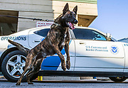 U.S. Customs and Border Protection K-9 unit searching vehicles at the Peace Bridge. The Canada/ United States Border.