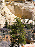 The cross-bedded sandstone walls of Lick Wash, Grand Staircase-Escalante National Monument, near Kanab, Utah.