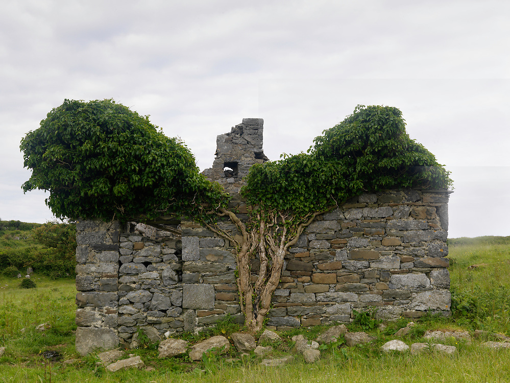 Ivy Hedera helix growing on ruin Ireland Burren region