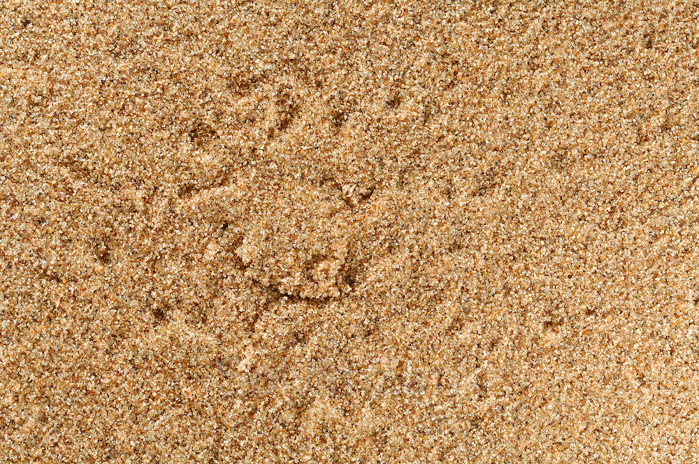 Dune spider burrow (Leucorchestris arenicola)<br />In the early morning hours, tracks in the sand tell the story of nightly activities in the desert. A close look can reveal tracks of desert spiders around the camouflaged entrance to their burrows. The closed lids of their burrows can be detected lying flat on the sand. In the desert, no one leaves their door open while they are at home. These dune spiders belong to the family of Giant Crab Spiders. Their burrows extend to around 40 cm into the sand and are stabilised with spider silk. During day time, the spiders sit in their burrow and wait for prey organisms such as beetles to come by. For this photo, I positioned the flashes very closely to the ground to achieve better contours in the sand structure.<br /> | Die zu den Riesenkrabbenspinnen geh&ouml;renden D&uuml;nenspinnen (Leucorchestris arenicola) der Namib tarnen die Eing&auml;nge ihrer 50 cm tiefen H&ouml;hlen mit einer sandbedeckten Klappe aus Spinnenf&auml;den. Die imposanten, bis zu knapp handtellergro&szlig;en Spinnen k&ouml;nnen 2 bis 5 g schwer werden und hinterlassen im D&uuml;nensand bei den n&auml;chtlichen Jagdausfl&uuml;gen deutlich sichtbare Spuren, anhand derer man die fast unsichtbaren Eing&auml;nge finden kann. Wissenschaftler r&auml;tseln, wie z.B. die &quot;Wei&szlig;e T&auml;nzerin&quot; genannte Spinne (Leucorchestris arenicola) in stockfinsterer Nacht aus einem Radius von bis zu 90 m schnurgerade zu ihrer H&ouml;hle zur&uuml;ckfinden kann.