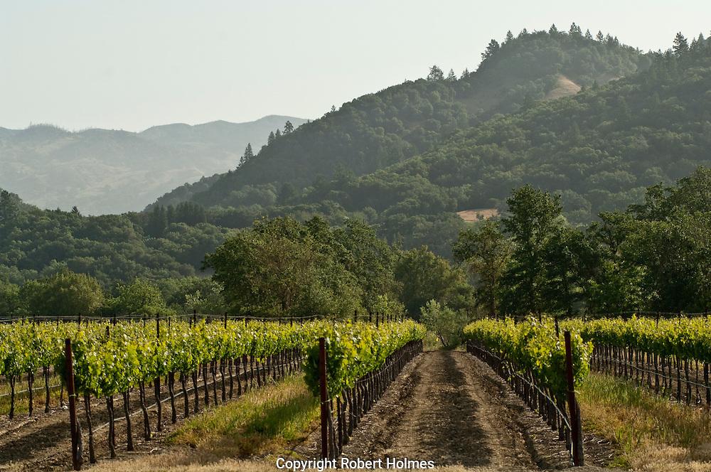 Alexander Valley, Sonoma County, California