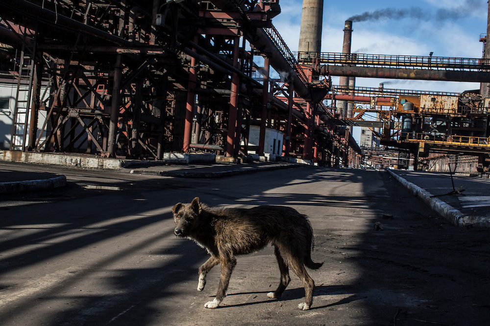A stray dog at the Avdiivka Coke Plant on Tuesday, February 16, 2016 in Avdiivka, Ukraine. The factory produces coke from local coal for use in Ukrainian steel production.