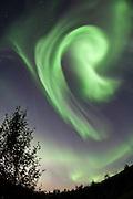 Aurora Borealis swirls over Þingvellir National Park, south-west Iceland