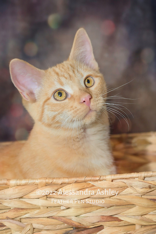 Peach-colored cat in straw basket, with bokeh background.