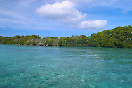 Aldabra Atoll, The Seychelles<br /> Frigate bird colony in an emerald coloured<br /> lagoon<br /> c. Ellen Rooney