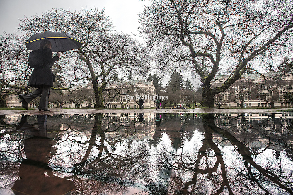 Heavy rains had students at the University of Washington dodging all sizes of puddles as they walked along King Lane in the Liberal Arts Quad. (Steve Ringman / The Seattle Times)