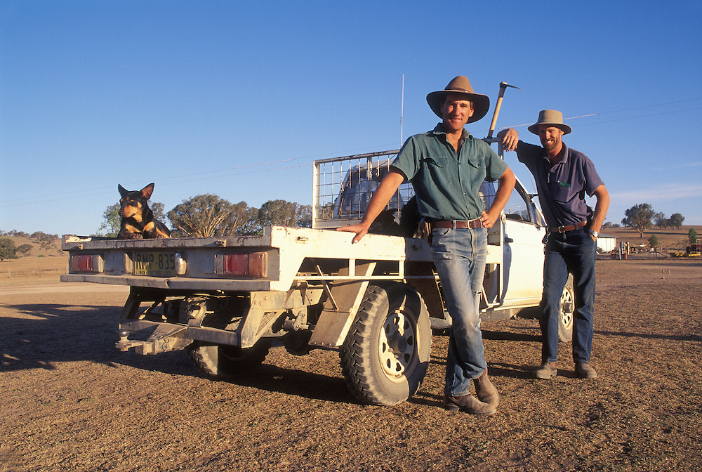 Australia, New South Wales, (MR) Ranch hands Steve Boyd & Peter Coble work at Narra Allen Station near Boorowa