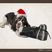 Talon's first Christmas.  Photo illustration.