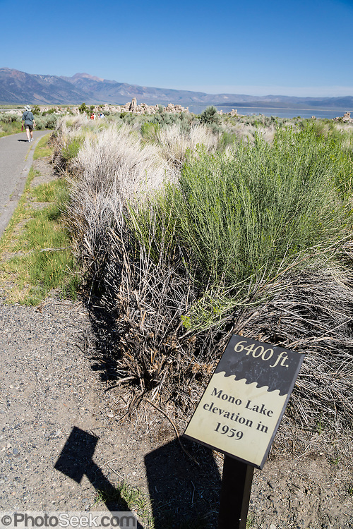 A sign indicating the 1959 lake level of Mono Lake is visibly far from the current lake edge, photographed in July 2015, at South Tufa Area, Mono Lake Tufa State Natural Reserve, Lee Vining, California, USA. Since 1941, diversion of lake water tributary streams by the city of Los Angeles lowered the level of Mono Lake, which imperiled migratory birds and an important ecosystem. In response, the Mono Lake Committee won a legal battle that forced Los Angeles to partially restore the lake level. The Reserve protects wetlands that support millions of birds, and preserves Mono Lake's distinctive tufa towers -- calcium-carbonate spires and knobs formed by interaction of freshwater springs and alkaline lake water. Mono Lake has no outlet and is one of the oldest lakes in North America. Over the past million years, salts and minerals have washed into the lake from Eastern Sierra streams and evaporation has made the water 2.5 times saltier than the ocean. This desert lake has an unusually productive ecosystem based on brine shrimp, and provides critical nesting habitat for two million annual migratory birds that feed on the shrimp and blackflies.