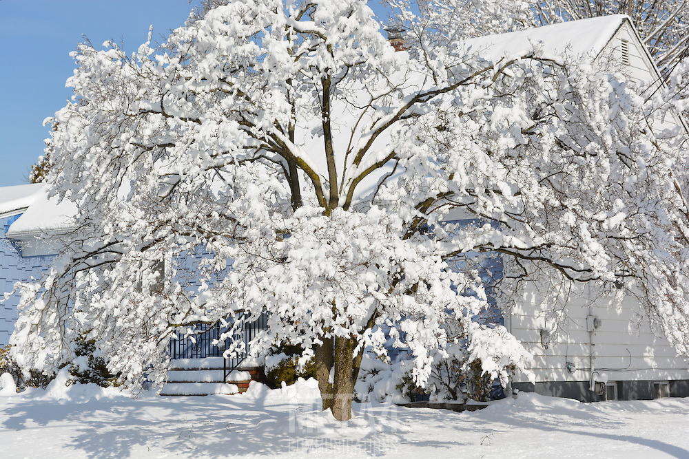 Freshly fallen snow covers the trees in a winter scene.