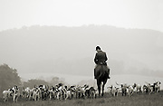 John Tulloch, a huntsman for Mr. Stewart's Cheshire Foxhounds leads hounds across a field near Coatesville, Pa. (Photography by Jim Graham)