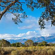 Eastern Sierras, Bishop, CA.