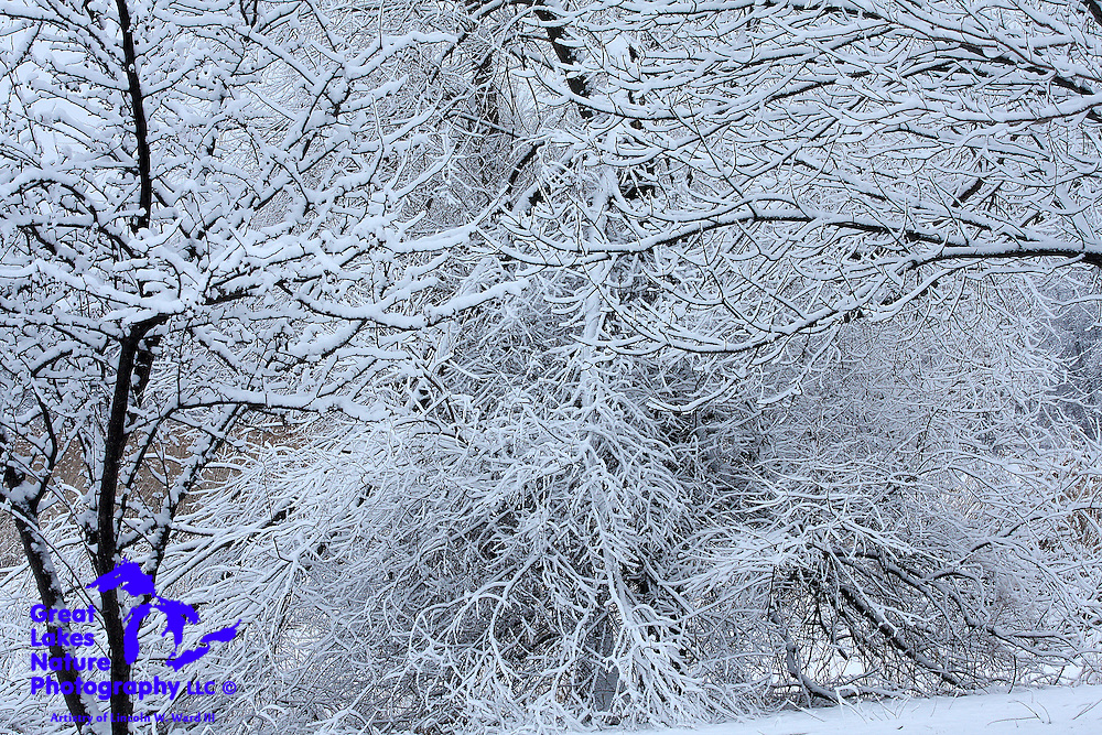 Heavy, wet snow fell on February 17 & 18, 2009, in Northeast Wisconsin, creating an almost magical white coating on all of Mother Nature's creations. The tree branches in this image are struggling mightily to support the weight of the fluffy coating.
