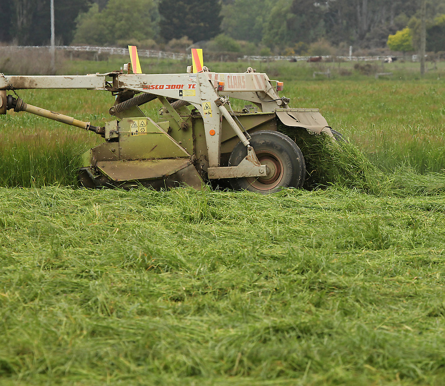 Mowing hay, Woodend, New Zealand, Tuesday, 10 November 2015.   Credit: SNPA / Pam Carmichael