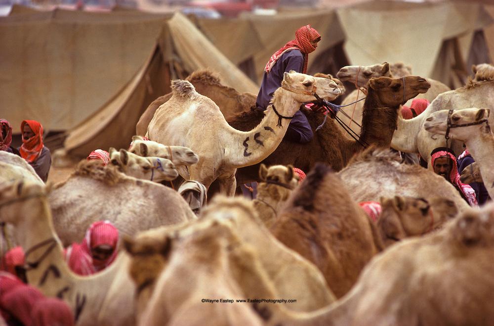 Jinayderiah Camel Market