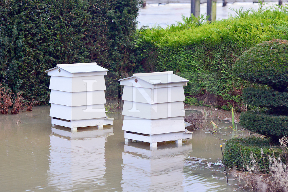 © Licensed to London News Pictures. 09/01/2014. Marlow, UK. Bee Hives in floodwater. Rising river levels in the River Thames at Marlow in Buckinghamshire have led to flooding and property damage along the river today 9th January 2014. Large areas of Britain are experiencing flooding after wet weather. Photo credit : Stephen Simpson/LNP