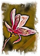 Floral Art Portfolio