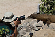 GALAPAGOS, Isla Santa Fe (April 14, 2007) --  A Galapagos sea lion takes a direct interest in a photographers camera at a beach in Isla Santa Fe.  Sea lions are inquisitive and playful, yet aggressive at times. They are attractive and endearing, but also lazy as they lie on the beaches soaking up the sun and replenishing their oxygen. Youngsters and occasionally adults, will body surf when the waves are right. They always seem to be playing with something, whether with each other, marine iguanas, penguins, red crabs, or just a piece of seaweed. According to the Galapagos Conservancy, not surprisingly, the vast majority of visitors to Galapagos (63%) hope to see and experience the unique ecosystems found no where else on earth. About half of those polled have a general interest in world travel. The marine life and terrestrial fauna and flora are also big draws for some people, yet only a small percentage (14%) of people said they come to experience the climate and geology of the islands.  A strong majority of visitors to Galapagos already have a good understanding of conservation issues. Nearly three quarters of respondents claim to have a solid understanding of the biodiversity of the archipelago, as well as recognition of the need to balance tourism with conservation management practices in Galapagos. However, almost half the visitors are not familiar with the many social, political, and economic issues facing Galapagos. According to survey results, members are very concerned for the future of Galapagos. They are overwhelmingly most worried (85%) about the threat that invasive species pose to the biodiversity of Galapagos. Three quarters of respondents also expressed concern regarding Ecuador?s commitment to Galapagos conservation, as well as concern over the increasing number of tourists visiting the islands annually. Of the many conservation issues affecting Galapagos, our survey respondents were least worried about the growing size of Galapagos? resident populat