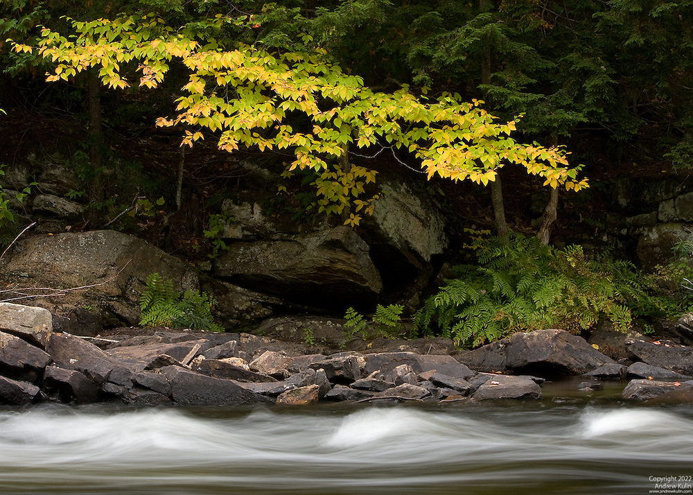 Yellow Leaves overhanging the Oxtongue River Rapids, located west of Algonquin Provincial Park - Autumn / Fall 2009.3349x2349 (original size)