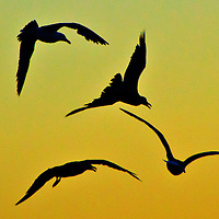 A Seagull flies above Santa Monica on Tuesday, June 18, 2013.
