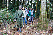 Ben, a Gorilla tracker/guide with a group of international travellers trekking the Bitukura group of Mountain Gorilla in Bwindi Impenetrable Forest, South Western Uganda.