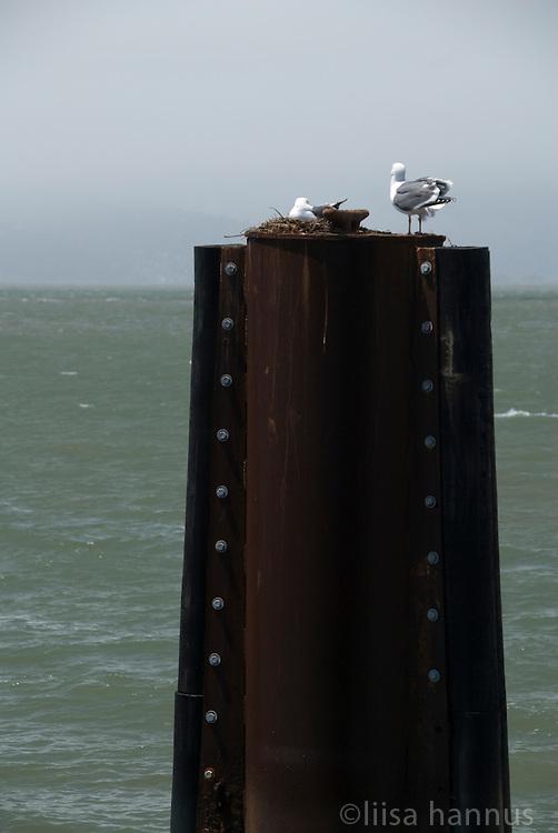 Along the Embarcadero, San Francisco