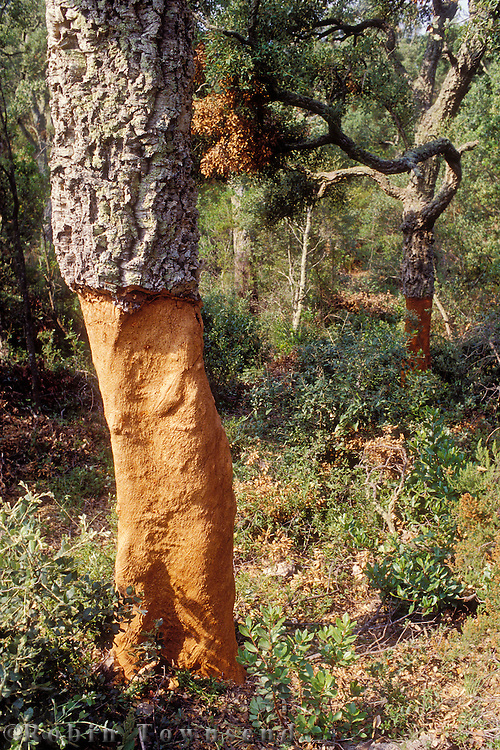 Catalonia's cork industry