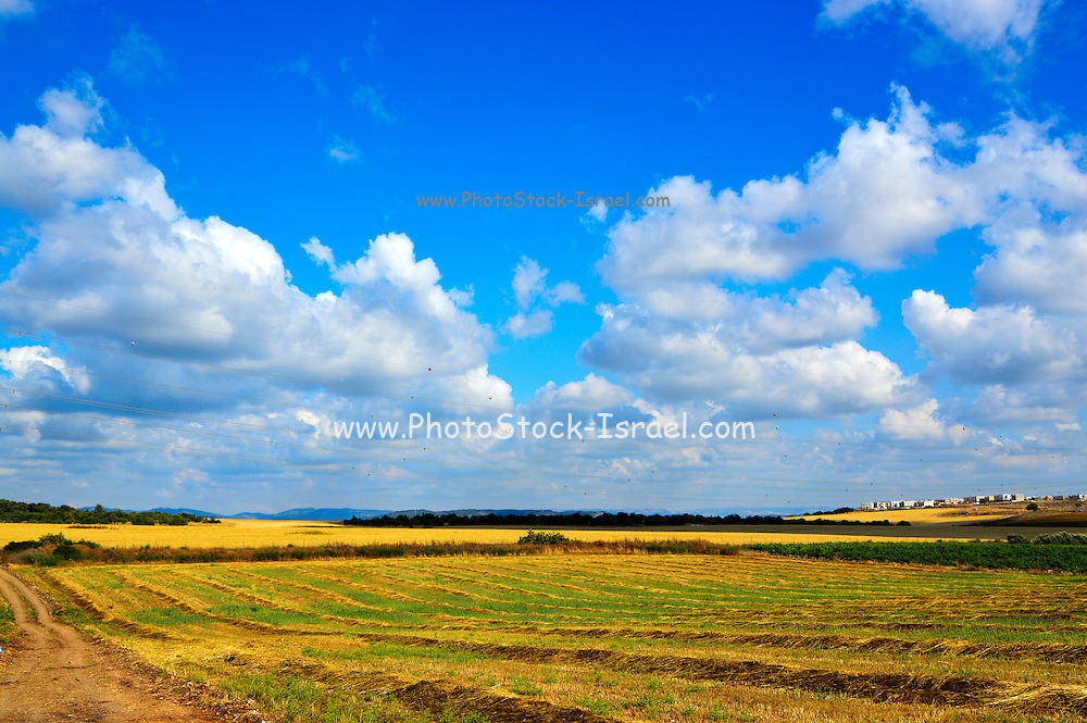 Rural spring landscape Photographed in Israel in May