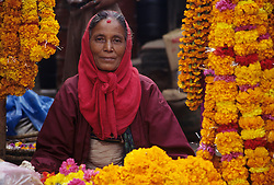 Asia, Nepal, Kathmandu, Asan Tole Square. Hindu woman sells strands of marigolds, used to decorate homes for Tihar Dipawali Festival.